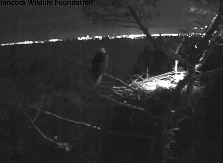 The White Rock #1 site wide angle camera showing the IR lights on the nest