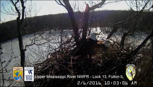 Click on image to download