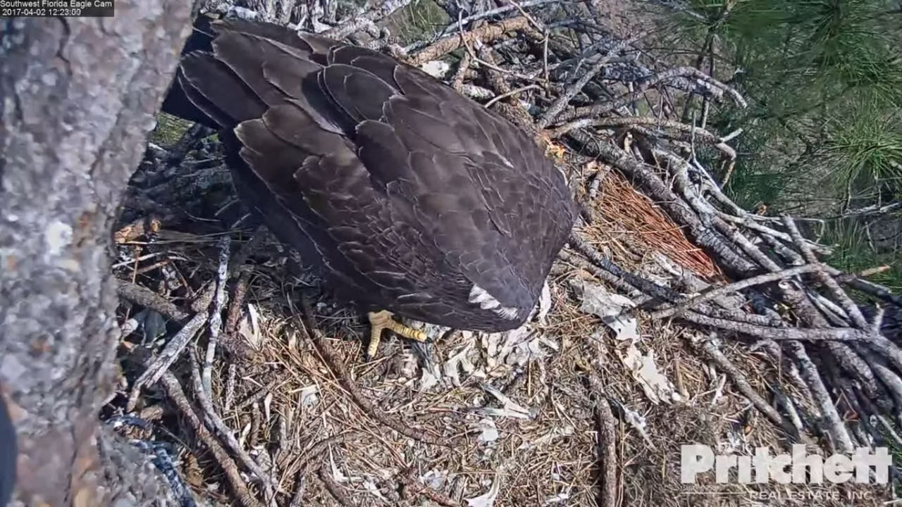 eagle nest chat rooms Hays eagles chat transcript: march 27, 2014 tribune it's doubtful that eagles will nest very close to the existing nests thanks to everyone for joining our chat.