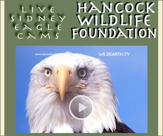 Watch LIVE Eagle Cams!