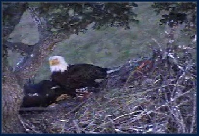June 22: MOM SLEEPS WITH THE EAGLETS TONIGHT
