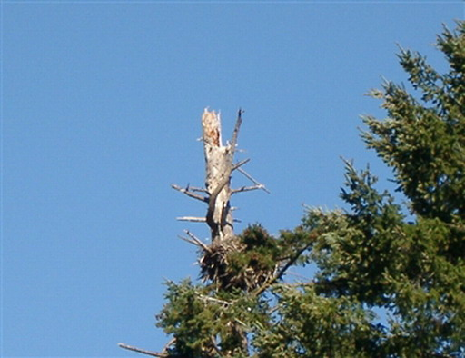 A closer view of that nest, March, 2005, before nesting
