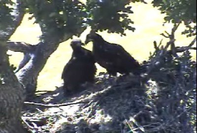 12:19pm - THE EAGLETS STAY FROZEN IN POSITION