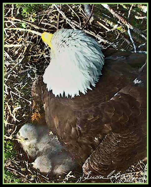 05/20/13 Momma and Babies
