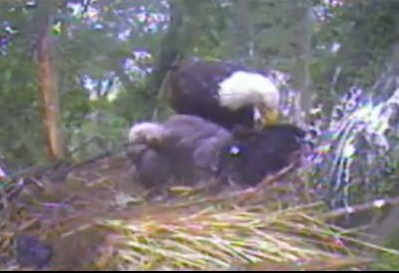 Screencapture - Moving the other occupant.