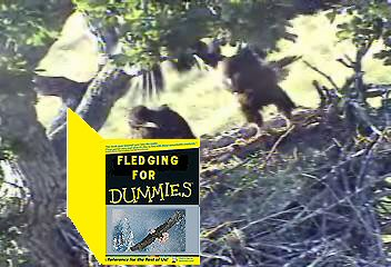 Lil - Unknown creator from 2006 - Lil reading Fledging for Dummies book - PM me if you know name of creator