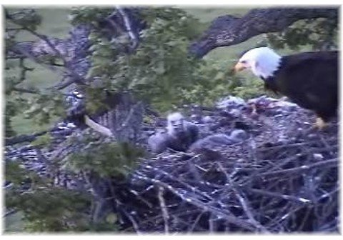 Time for little eaglets to go to bed.