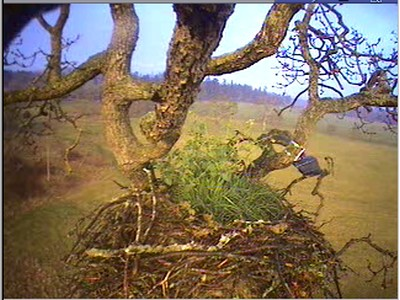 The nest...fresh after the rain....