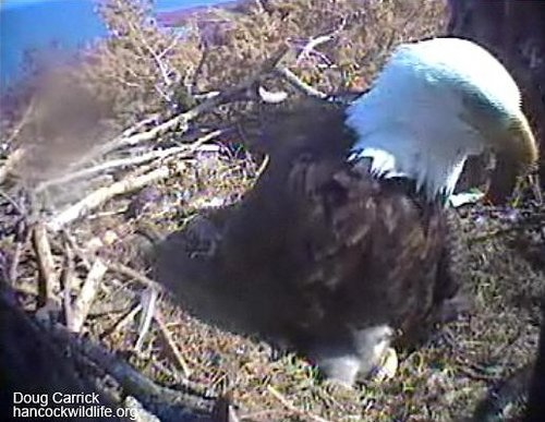 Screencapture - Ma Hornby, Hope and Egglet #2