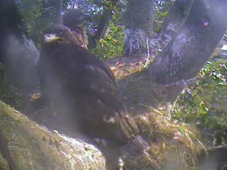 Screencapture - New View of the Nest