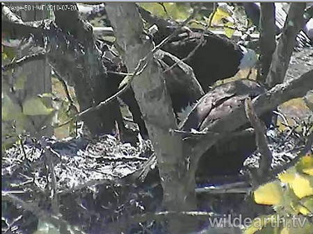 Laf 7-20-10 everyone home on the nest 2-35 pm
