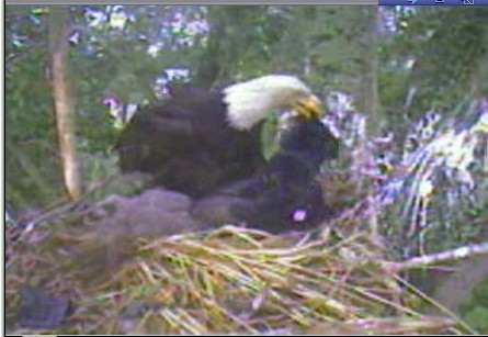 Mom Delta picking up toy in nest.