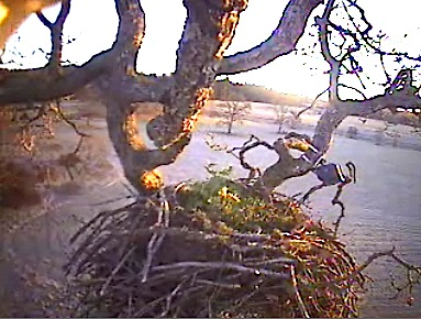 Last day of 2007 -- Sunshine on the nest.