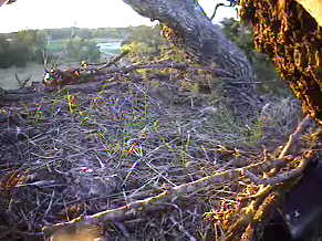Grass growing on the nest in Sept.