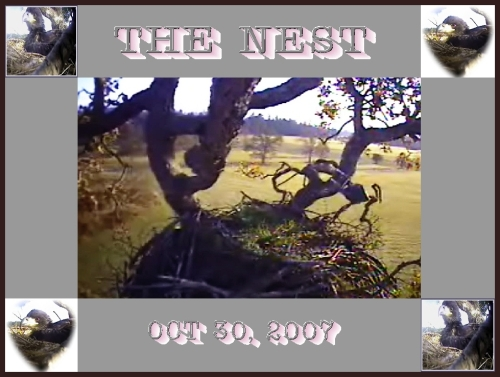 THE NEST OCT 30, 2007