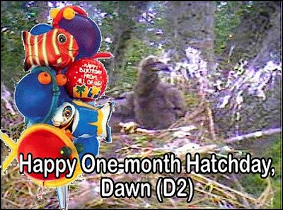 Enhanced Screencapture - Happy One-month Hatchday, Dawn (D2)