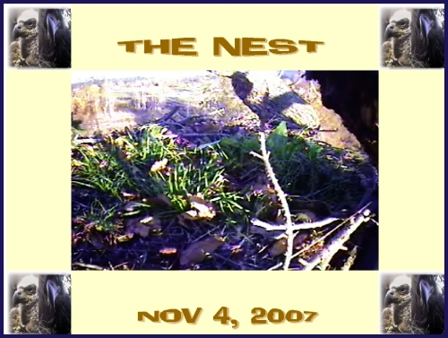 THE NEST NOV 4