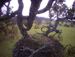 A wet and rainy afternoon at the nest....