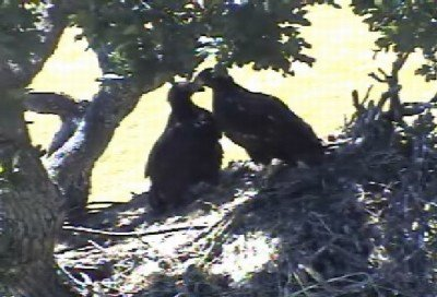 12:12pm - EAGLETS MOVE TOGETHER