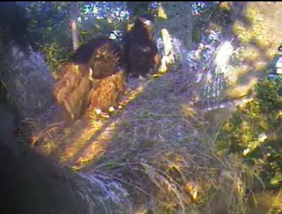Screencapture - Sunny at the Nest 6:04am July 7, 2008 Delta 1