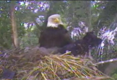 Screencapture - Toy Almost Out Of The Nest