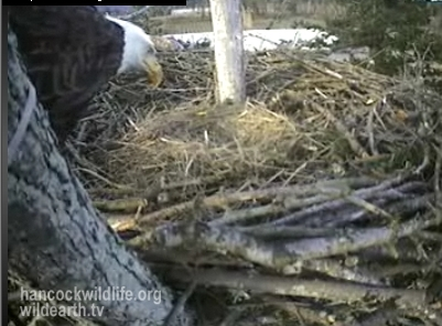 adult returns to the nest