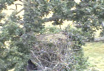 Victoria hanging on side of nest