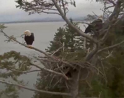 Both at a very windy nest