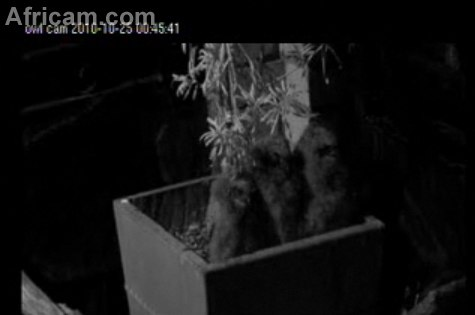 October 24, 2010