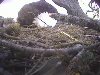 DIGGING DOWN IN THE NEST