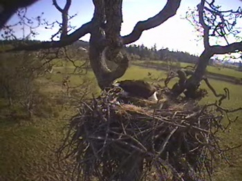MOM HEAD IN THE NEST