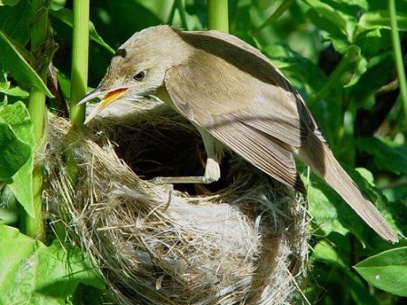 Bird on her nest