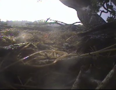 the glint of rain on nest and chick