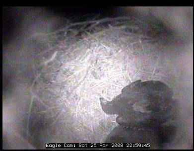 shhhh!!! Blackwater eaglets sleeping