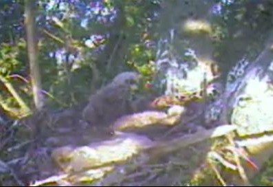 One eaglet waking.