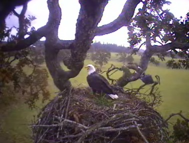10:45 am Oct. 11/07    Adult visits nest