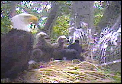 Screencapture - Introducing the Newest Member of the Delta Eagle Family - Woobie!!!