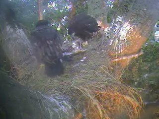 Screencapture - 'Lets Self Feeding 7/08/08
