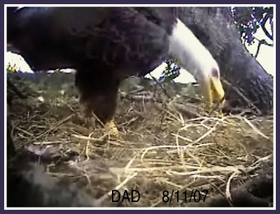 DAD A VISIT TO NEST