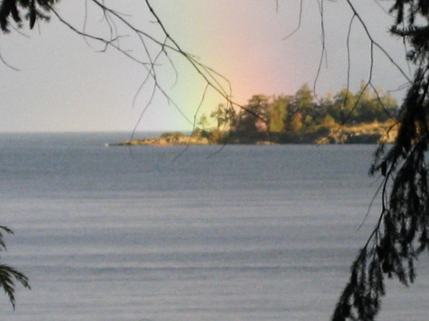 Nest on island, Nanoose Bay - Dec 26, 2007