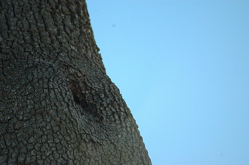 Wasp nest in nearby tree