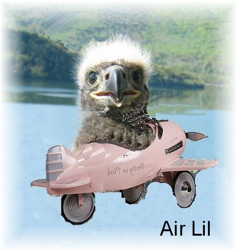 Unknown creator from 2006 - Lil Flying Pink Airplane