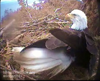 Screencapture - Hornby Nest March 26/09