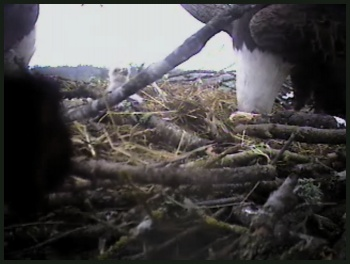 CLEANING THE NEST
