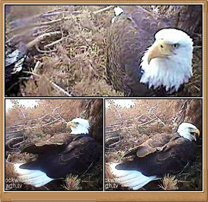 Screencapture - Mom Hornby Relaxes in the Nest