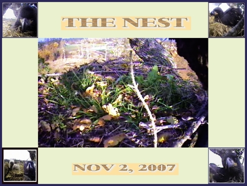 THE NEST NOV 2