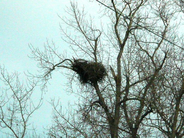 Wallace Drive Nest ~ Brentwood Bay, BC (Dec. 2007)