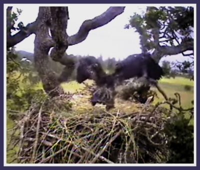 I KNOW ABOUT THE NEST  ME NO TELL!