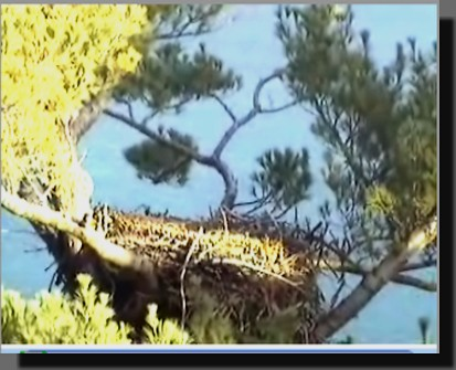 Eagle Nest in Maine