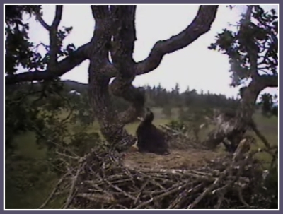 MOMMA ARE YOU UP IN THE TREE